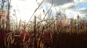 Frühjahr-Feld